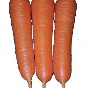 Carrot 113-022 F1