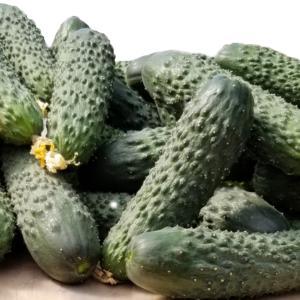 Cucumber Alizar F1