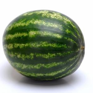 Watermelon Josy F1