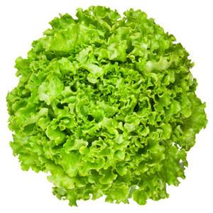 Salad Sandy F1